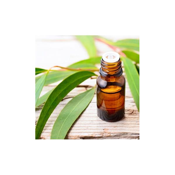 10ml Eucalyptus Essential Oil